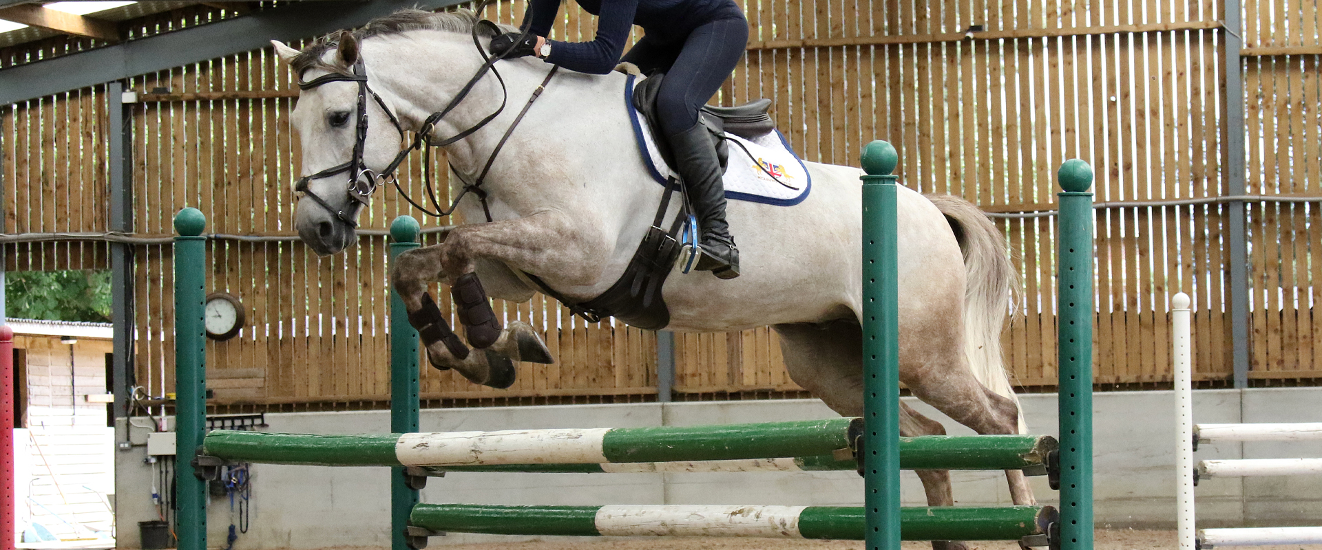 Show Jumping Horses For Sale