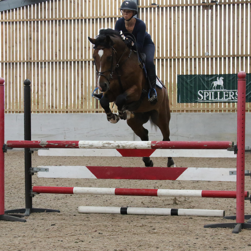 Show Jumping Stallion